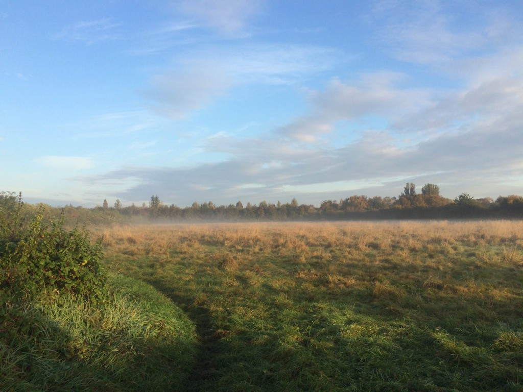 meadows-october-img_1826